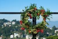 Heteromeles arbutifolia -  -  -