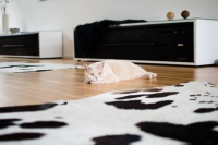 10 Tips for Keeping Indoor Cats Healthy and Happy