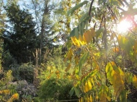 An Ode to Autumn in the Garden