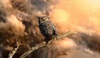 Backyard Birds: Go Owling in October