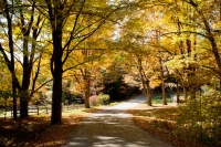 Houzz Call: Show Us Your Autumn Views